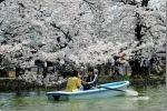 ueno-shinobazu-pond-boat