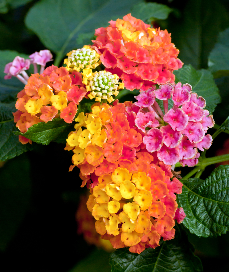31 flowers beginning with l romantic ideas in life larkspur mightylinksfo